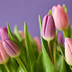 Como-elegir-flores-para-ocasiones-especiales