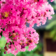 Flores ideales para el verano
